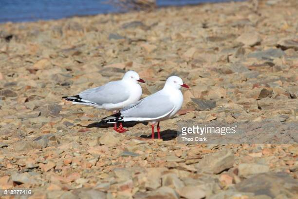 Seagulls standing