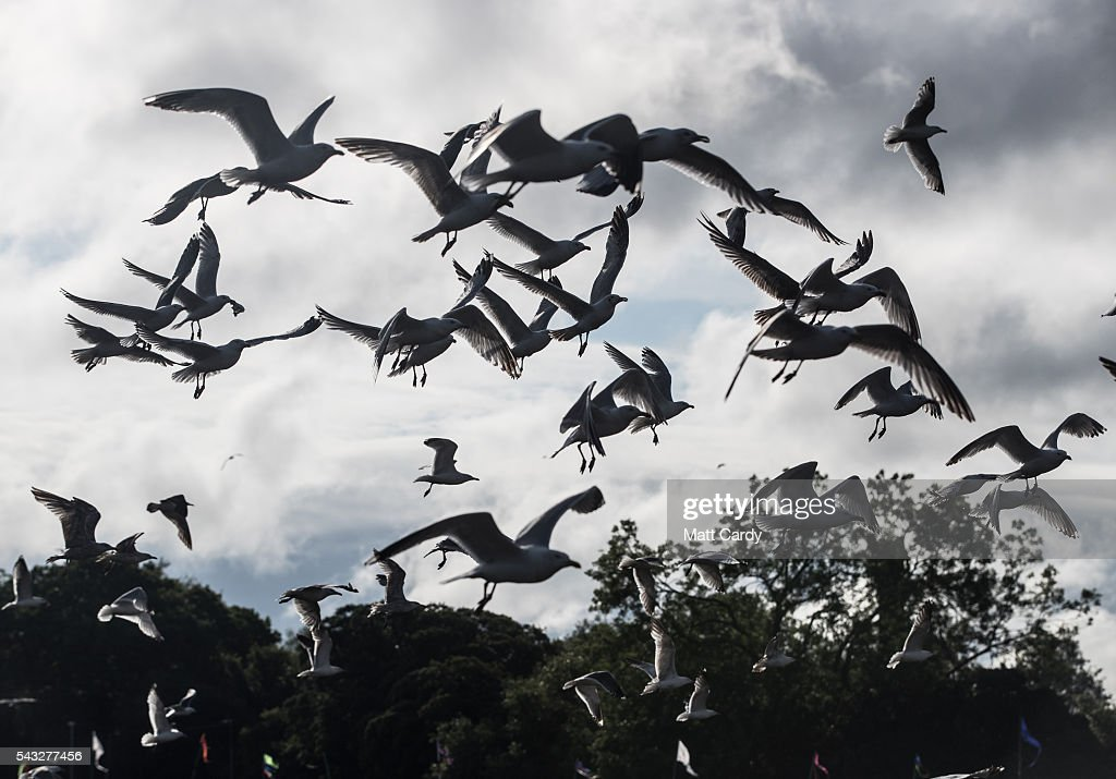 Seagulls swarm above rubbish left in front of the main Pyramid Stage at the Glastonbury Festival 2016 at Worthy Farm, Pilton on June 26, 2016 near Glastonbury, England. The Festival, which Michael Eavis started in 1970 when several hundred hippies paid just £1, now attracts more than 175,000 people.