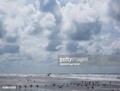 Gaviotas, Texel : Foto de stock