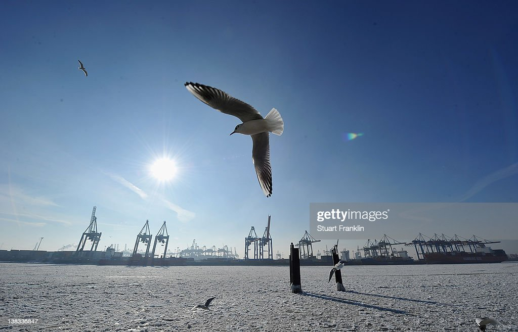 Seaguls fly over the ice on the river Elbe on February 6, 2012 in Hamburg, Germany.The current cold front that has claimed over 200 lives in eastern Europe makes its way west.