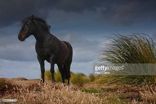 Sealion Island horse