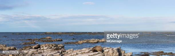 Seals are on the rocks of the seaside,near Kaikoura,South Island, New Zealand