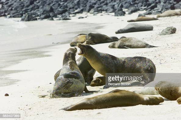an analysis of oil spill that threatens galapagos From jan 21, 2001: oil spill threatens galapagos islands the current is pushing the spill south and officials are concerned it could soon reach spain island, which is home to large colonies of .