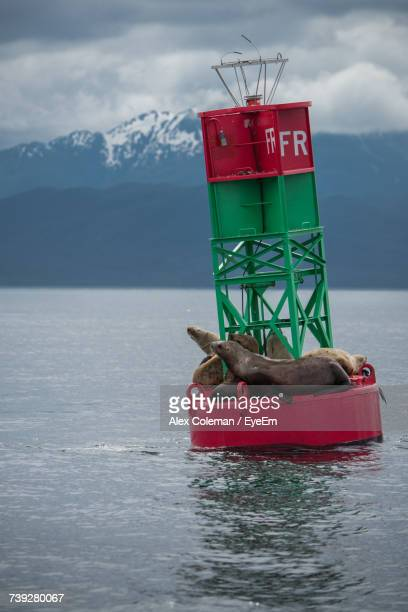 Seals On Buoy In Sea Against Sky