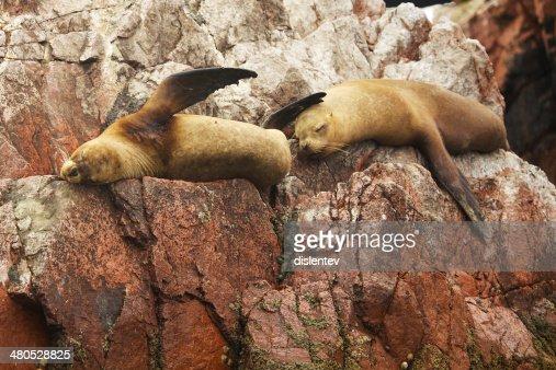 Seals : Stock Photo