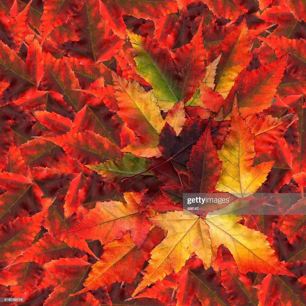 seamless background pattern texture made of maple leaves : Stock Photo