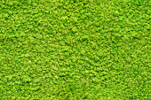 seamless close up green moss texture