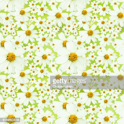 Seamless nature background. : Stock Photo