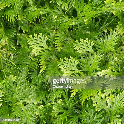 Seamless nature background. : Stock Photo