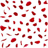 Seamless texture of dark red rose petals. Isolated background