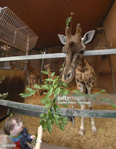 Sean Gordon from Newry gets a chance to feed a giraffe in Belfast Zoo with help from mum Maureen as part of the zoo's first ever day for children who...