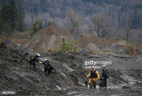 A search and rescue team from Sacramento California with cadaver dogs searches debris from a deadly mudslide on April 4 2014 in Oso Washington...