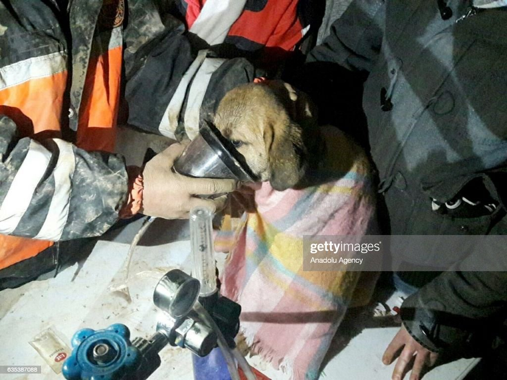 Puppy Rescued From Borehole Well After 11 Days
