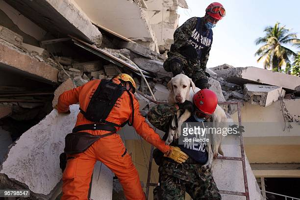 Search and Rescue workers from Mexico carry their dog as they searches for survivors trapped under the rubble of what is left of a building after the...
