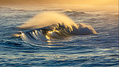 Seascape: wave breaking at sunset, sunlight catching the tube and spray