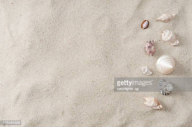 Seashell and beach sand