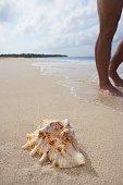 Seashell on beach next to man's feet