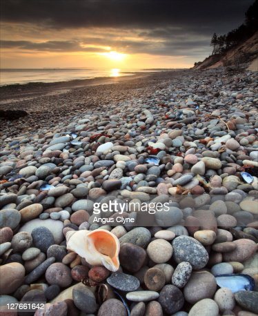 Seashell on pebble beach stock photo getty images for Pebble beach collection