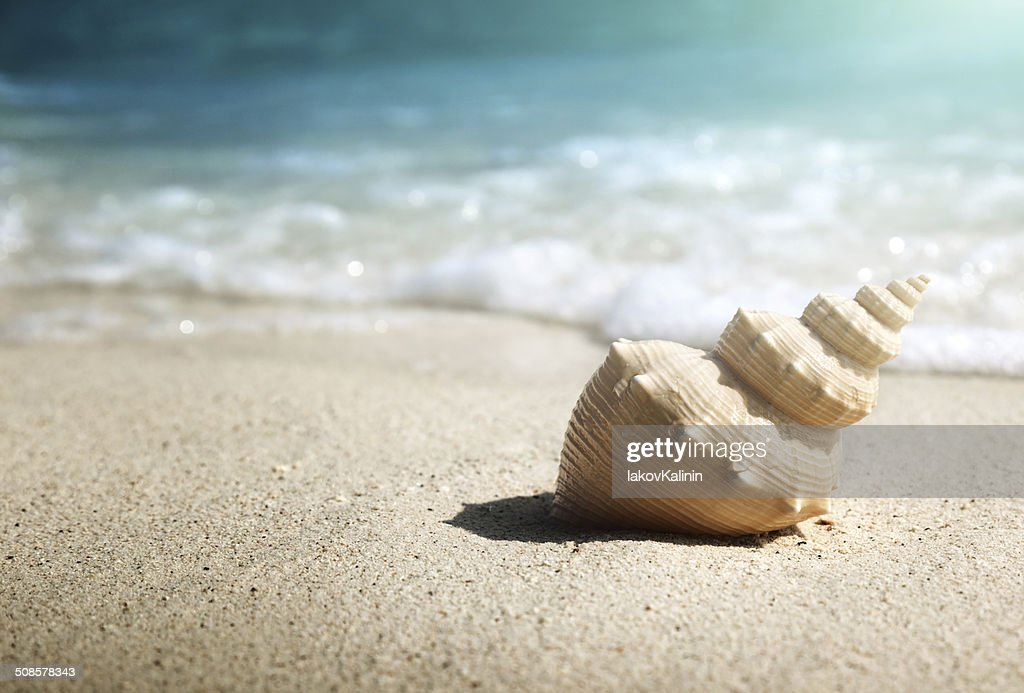 seashell on the beach (shallow DOF) : Stock Photo