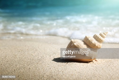 seashell on the beach (shallow DOF) : Stock Photo