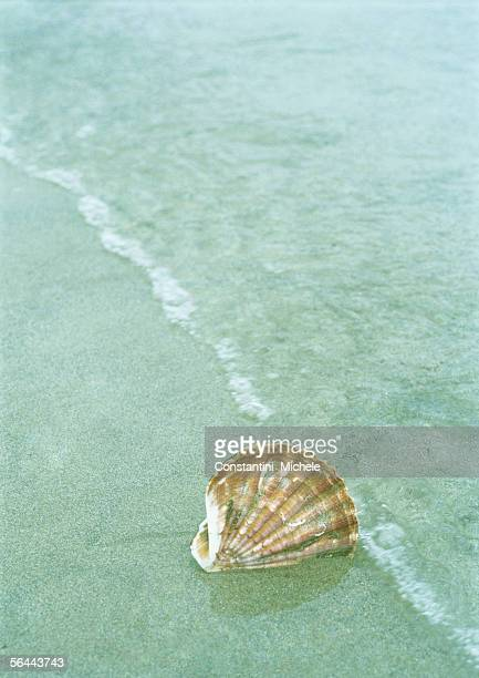 Seashell sticking in sand