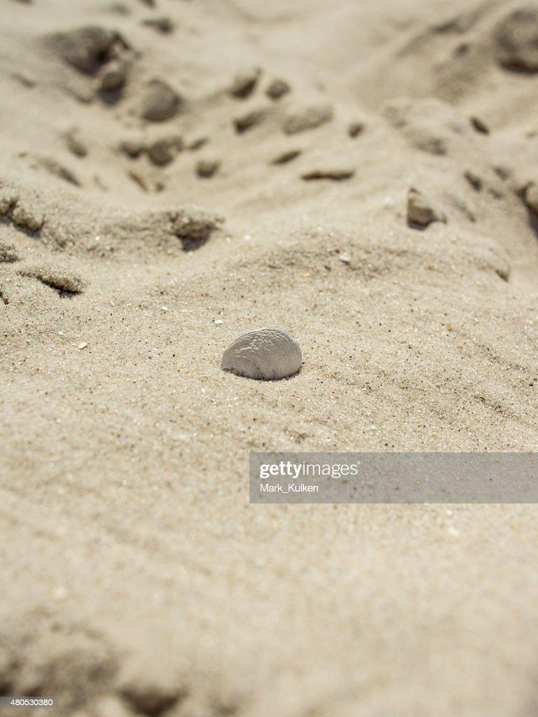 Coquillage coincé dans le sable : Photo
