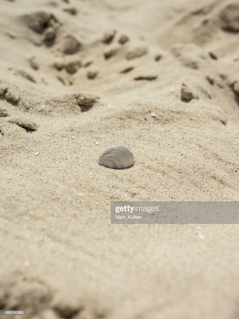 Seashell stuck in the sand : Stock Photo