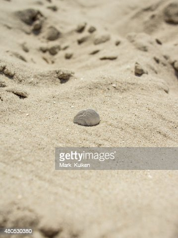 Seashell stuck in the sand : Stock Photo