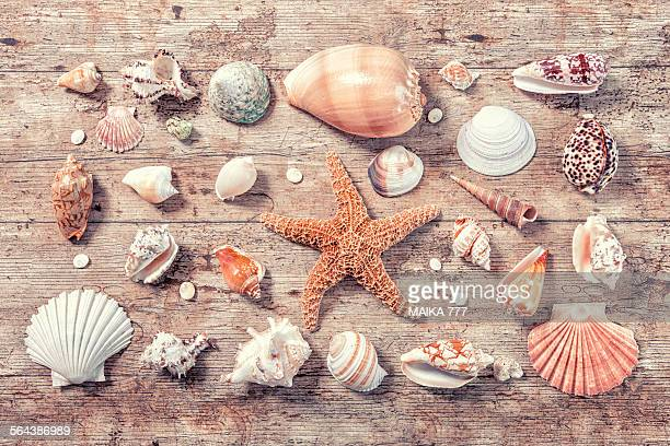 Seashells and starfish on old wood background