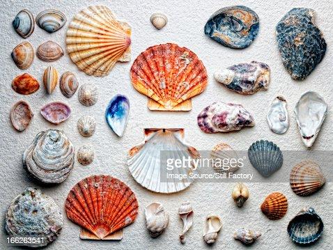 Seashells arranged on paper