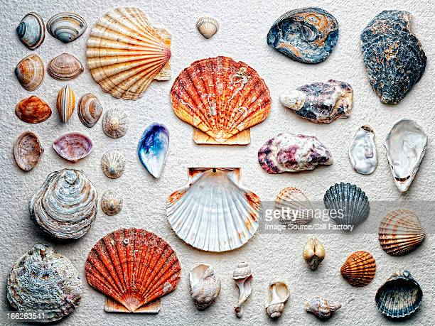 Seashells arranged on paper