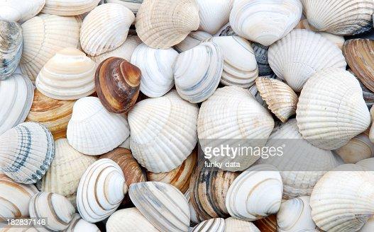Seashells as background