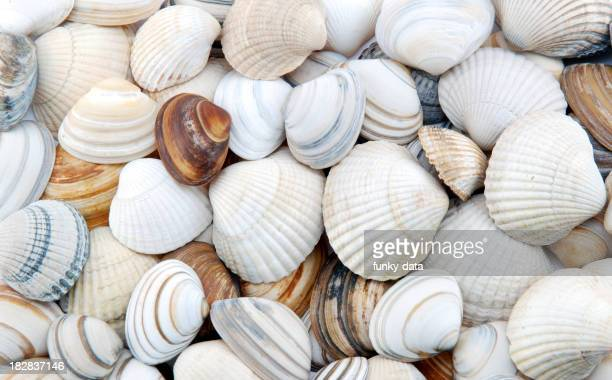 Seashells as background