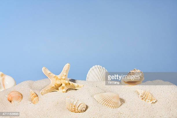 Seashells on Beach Sand, Starfish and Shells Under Summer Sky