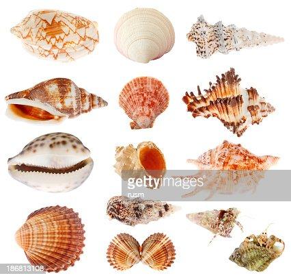 Seashells set isolated on white background