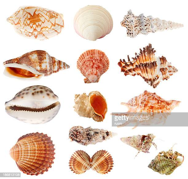 Seashells set isolated on white background