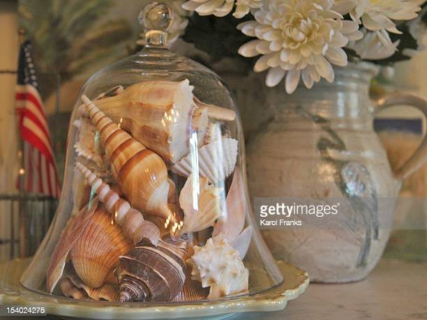 Seashells under glass