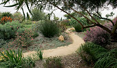 Seaside Gardens in Carpinteria boasts a few exotic gardens one being of the theme from the Mediterranean areas Visitors can move about the nursery...