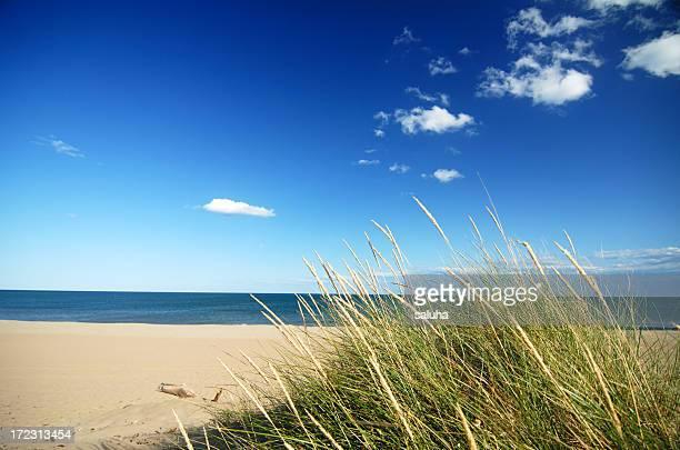 Sfondi di erba con cielo blu e nuvole e Cumulo