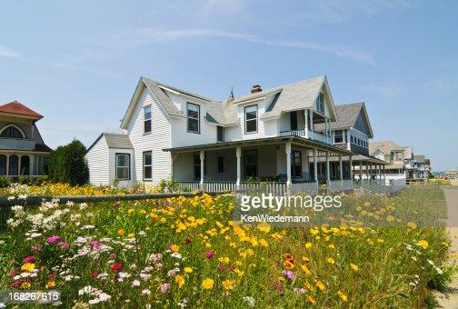 Seaside Wildflowers