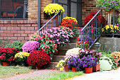 Main entrance stair and porch of the brick house decorated by colorful potted flowers for autumn holidays season. Close up horizontal composition.