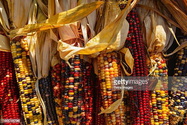 Seasonal indian corn
