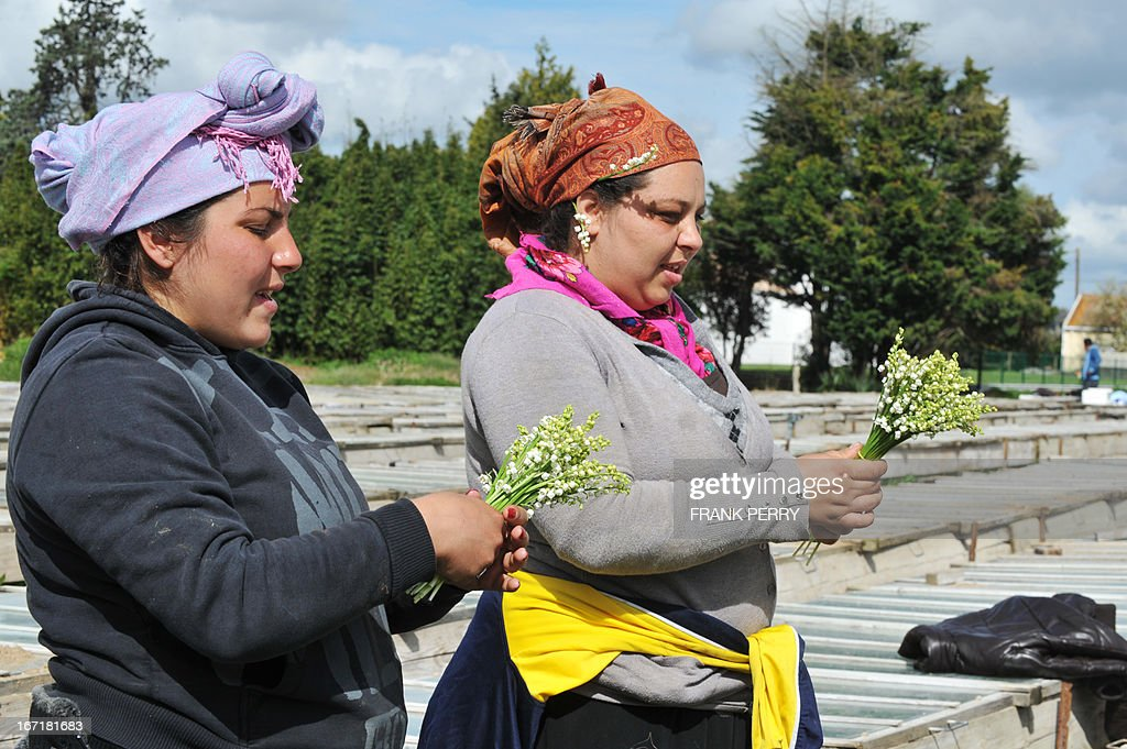 Seasonal workers pick up sprigs of lily-of-the-valley on April 22, 2013 in the western French city of Saint-Julien de Concelles, near Nantes.