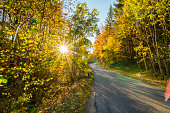 beautiful backlight winding country road in autumn october indian summer colorful foliage on trees in the forest with sun creating a bright scenery