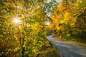 backlight country road in autumn october indian summer colorful foliage on trees in the forest with sun creating a bright scenery
