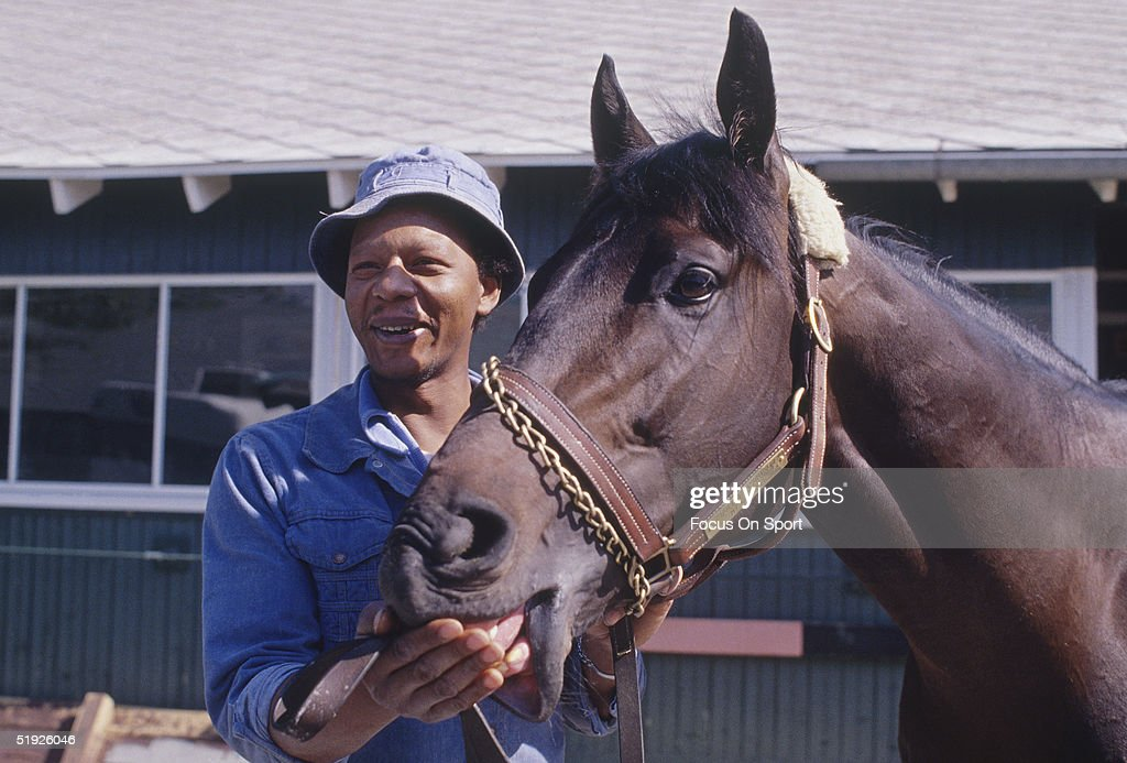 Seattle Slew eats a treat out of trainer William H Turner Jr's hand at the Kentucky Derby in June of 1977 in Louisville Kentucky Seattle Slew won the...