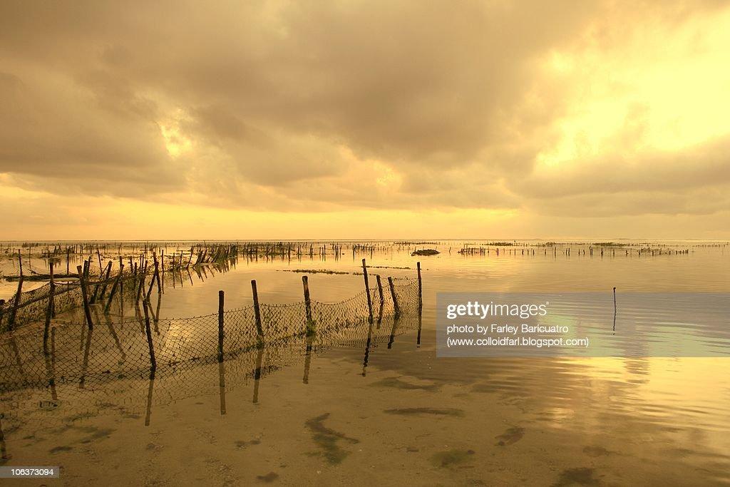 Seaweed farm  : Stock Photo