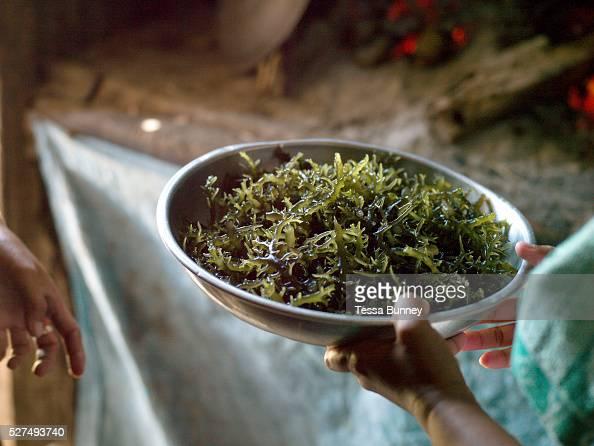 Seaweed farmer Marissa Gegante holding a bowl of freshly cooked seaweed Tamiao Bantayan Island The Philippines Before Typhoon Haiyan Bantayan Island...