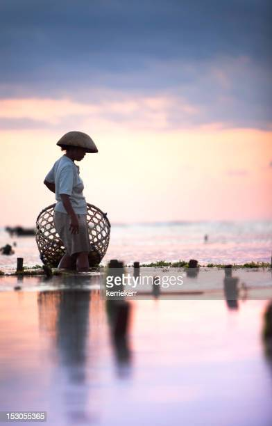 Seaweed farmer walking with basket through the water at dusk
