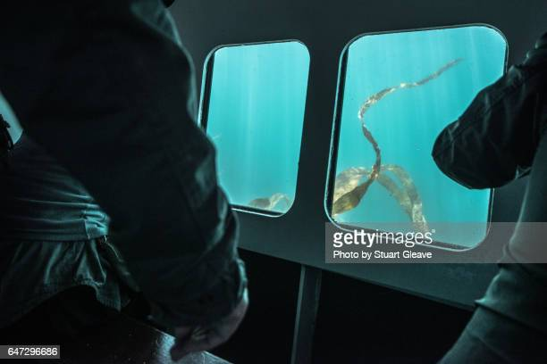 Seaweed from a submarine perspective